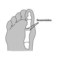 Imagem ilustrativa mostrando onde estão localizados os ossos sesamóides.