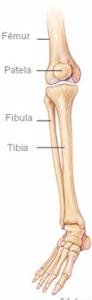 Anatomia da perna