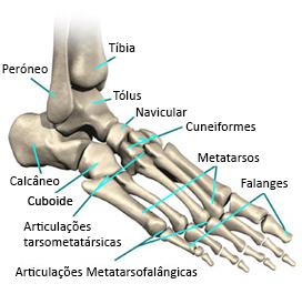 Imagem ilustrativa com todos os ossos do pé denominados.