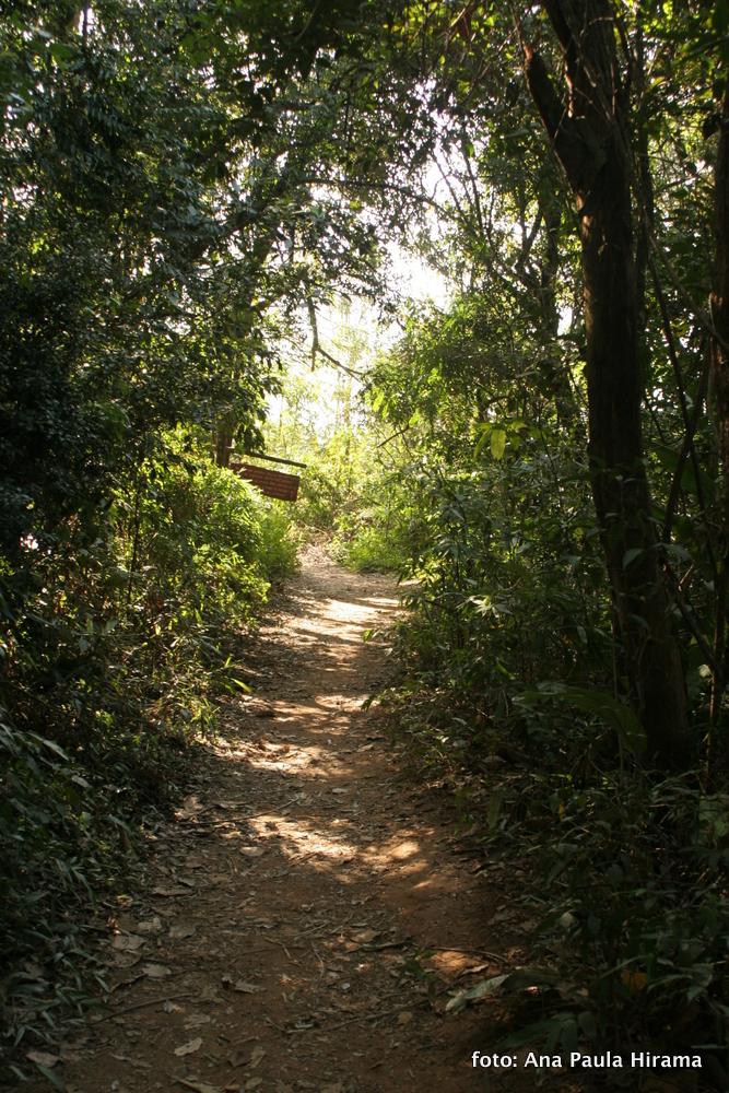 Fotografia de um dos trechos da trilha do Pico do Jaragua.